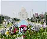 TrumpVisitIndia: बेनजीर ताज की खूबसूरती में कैद हो जाएंगे ट्रंप, देखें तस्वीरों में झलक Agra News
