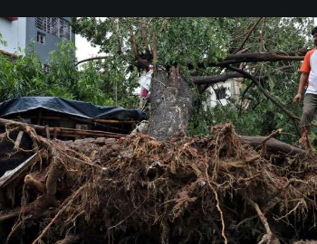 Cyclone Amphan Effect: धराशाई हो गया 270 साल पुराना वट वृक्ष, एम्फन ने बरगद के साथ-साथ अन्य कई शताब्दी पुराने पेड़ों को कर दिया नष्ट