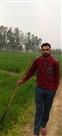जिला में गेहूं की फसल पर पीला रतुआ की दस्तक