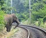 रेल लाइनों पर हाथियों को बचाएगा मधुमक्खी ध्वनि तकनीक यंत्र Gorakhpur News