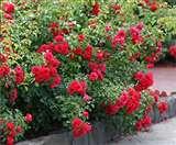 महरौली नर्सरी में लगा फ्लावर शो, लोगों ने जाना पौधों के घरेलूू फायदे