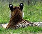 पश्चिम चंपारण : खेत में सो रहे युवक को बाघ ने मार डाला West champaran News