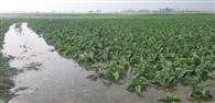 नहर का तटबंध टूटने से खेतों में भरा पानी