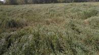 तेज हवा और ओलावृष्टि से फसलों को नुकसान
