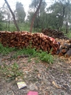 लठियाणी के लकड़ी ठेकेदार का डिपो सील