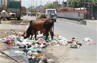 20 दिन में 15 टन से 50 टन पहुंचा शहर का कचरा