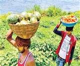 कृषि सुधारों पर अमल करें राज्य: सुधारों केे सही उपयोग से किसानों की आय दोगुनी हो सकती है