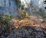 Valmiki Tiger Reserve: वीटीआर के जंगल में लगी आग, चार एकड़ में लगे पौधे जलकर नष्ट