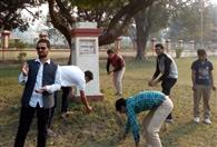 जनतंत्र वृक्ष बयां कर रहा संविधान दिवस की कहानी