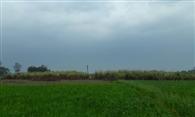 गेहूं की फसल के लिए अमृत बनकर बरसे बादल