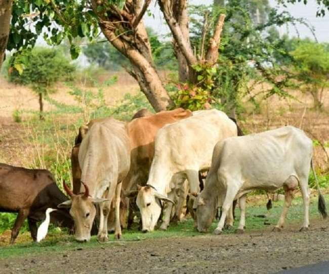 बिहार, मप्र सहित दस राज्यों में वन्यजीवों के लिए पर्याप्त चारे-पानी का होगा प्रबंध