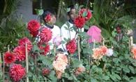 राजभवन की बगिया में 100 किस्म के गुलाबों का करें दीदार
