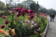 जैविक खाद से लहलहा रही बगिया, फूलों से महक रहा एनटीटीएफ