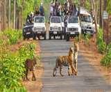 जिम कॉर्बेट नेशनल पार्क में दो नए पर्यटन जोन खुले, चले आइए जंगल सफारी का लुत्फ उठाने