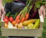 रूट्स वेजिटेबल्स को कैसे और कितनी मात्रा में खाना है सेहत के लिए फायदेमंद, जानें यहां