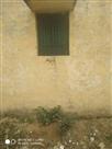 खिड़की के जरिए केंद्र पर पहुंचती थी सॉल्व कॉपी