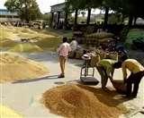यूपी की योगी सरकार किसानों को राहत देने के लिए दो अप्रैल से खरीदेगी सरसों, चना और मसूर