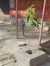 राज्य के प्रदूषित शहरों में डेरा बाबा नानक भी शामिल