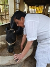 ऐसे बिताए दिन..गाय की सेवा में दिन बिता रहे कुमार बाबू