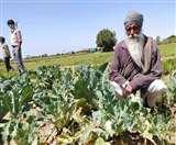 कोरोना का कहर: कर्फ्यू से सब्जियों की सप्लाई चेन टूटी, किसान और उपभोक्ता दोनों घाटे में