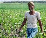 अंतत: किसानों को मिली आजादी, तमाम अनिश्चितताओं के बीच अथक परिश्रम का फल