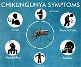 Chikungunya Symptoms : चिकनगुनिया से डरें नहीं, जानें क्या है इसके लक्षण...