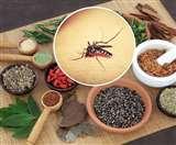 Dengue Ayurvedic Treatment: डेंगू होने पर घबरायें नहीं, अपनाएं ये आयुर्वेदिक अपचार
