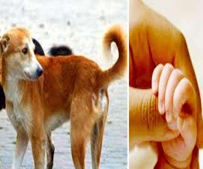 करनाल के आइसीएआर के साथ ग्रीन बेल्ट में एक नवजात के शव को कुत्ते नोंच रहे थे।