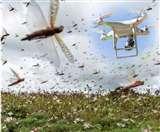 Locust Attack : अब ड्रोन से होगी टिड्डी दल की निगरानी, सूबे के MP बार्डर पर हुआ परीक्षण