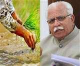 धान की खेती पर सियासत: सीएम मनोहरलाल ही नहीं कांग्रेसियों को भी सता रही है पानी की कमी