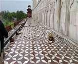 Taj Mahal Damage Due To Rain : कुछ देर का तूफान ताज को दे गया कई जख्म