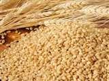 पंजाब से आया ४० हजार मीट्रिक टन गेहूं, नहीं होगी खाद्यान्न की कमी moradabad news