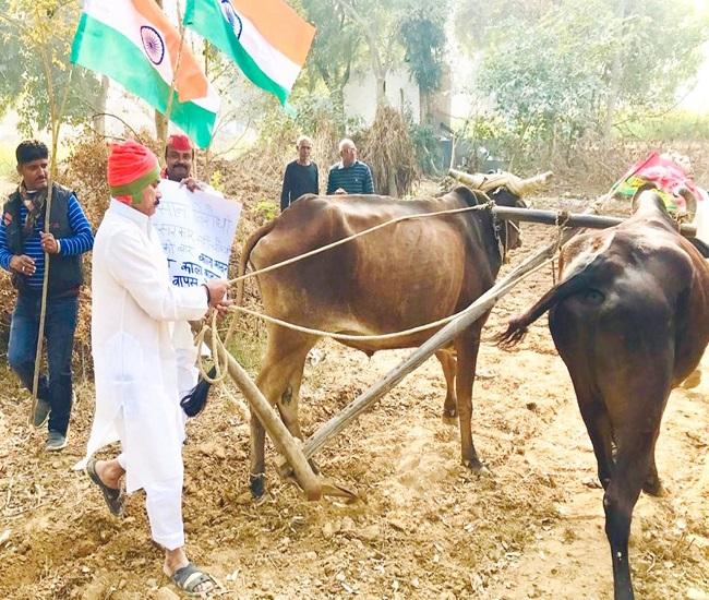 खेत में हल चलाकर सपाइयों ने किया किसानों का समर्थन-अलीगढ़ :समाजवादी पार्टी के राष्ट्रीय अध्यक्ष अख