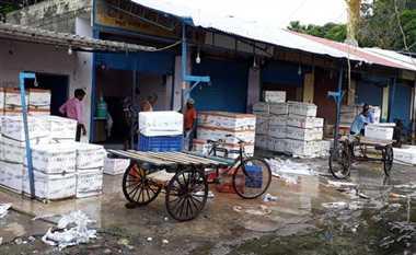 प्रतिबंध के बाद भी खुलेआम बिक रही अंडे वाली मछली