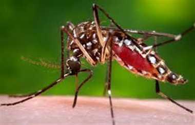 मिला डेंगू का लार्वा तो उड़ी विभाग की नींद
