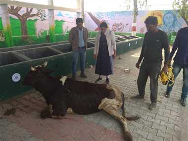 क्या आधे-अधूरे कान्हा पशु आश्रय का मंत्री से कटवा दिया फीता?