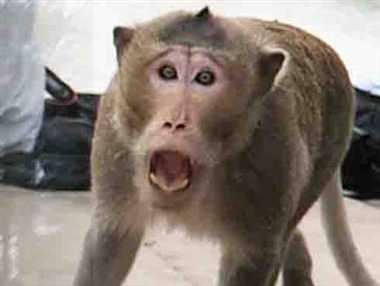एमएलएन मेडिकल कॉलेज में बंदर का आतंक