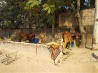 एक स्कूल जहां स्टूडेंट्स आैर टीचर की जगह भरे पड़े हैं जानवर, भूसा आैर ट्रैक्टर