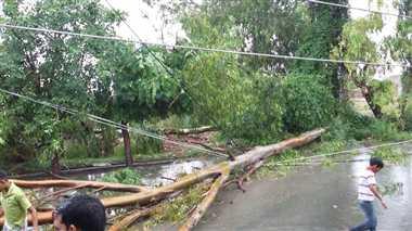 पेड़ गिरने से कई खंभे व तार टूटे, किशोर घायल