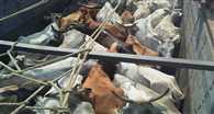 गौशाला से गायों की लूट की खबर से पुलिस-प्रशासन की फूली सांस