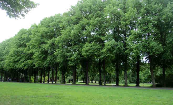 ग्रीन इंडिया : 400 पेड़ों को ट्रांसप्लांट कर पेश की मिसाल