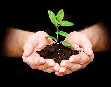पौधों से मिलेगी पॉजिटिव एनर्जी