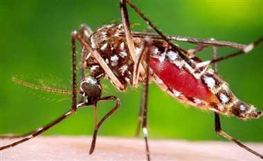 इस्माईलपुर में मिला डेंगू का लार्वा