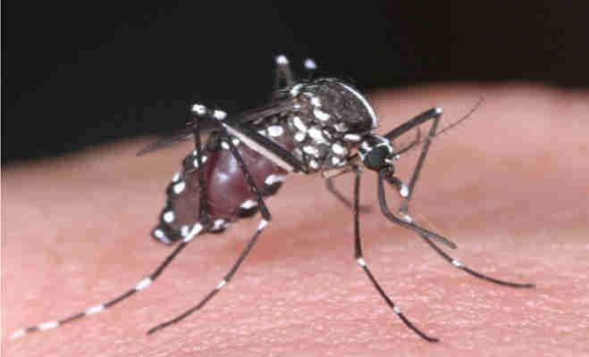 प्लेन में मच्छर की शिकायत पर यात्री को नीचे उतारने के मामले में सुरेश प्रभु ने दिए जांच के आदेश