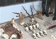 अपराध है वन्य जीव अवशेष रखना