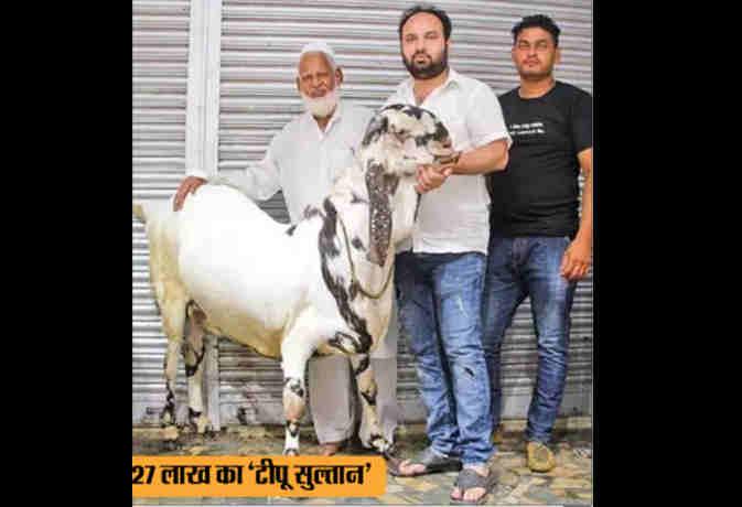 हैरान करने वाला है 27 लाख रुपये का बकरा टीपू सुल्तान