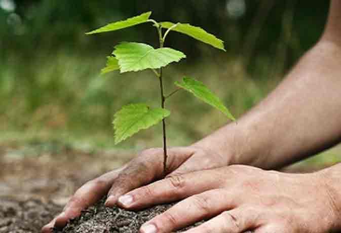 इस पेड़ की पत्तियां खाइए ठीक हो जाएगा कैंसर