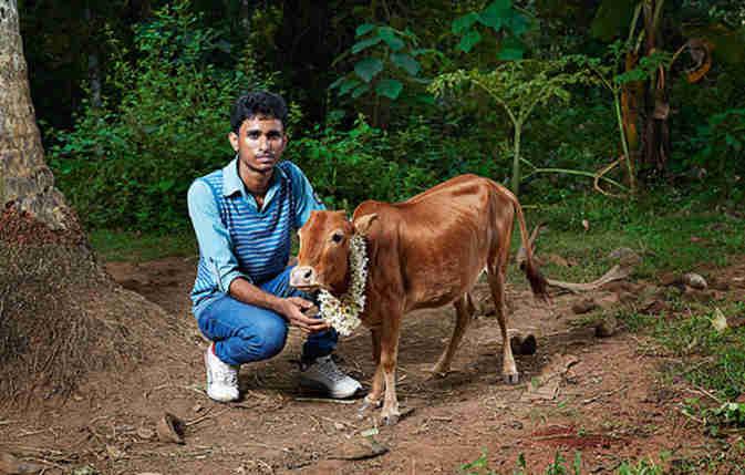 दुनिया की सबसे छोटी गाय है मनिकयम, गिनीज बुक में भी दर्ज है इसका नाम
