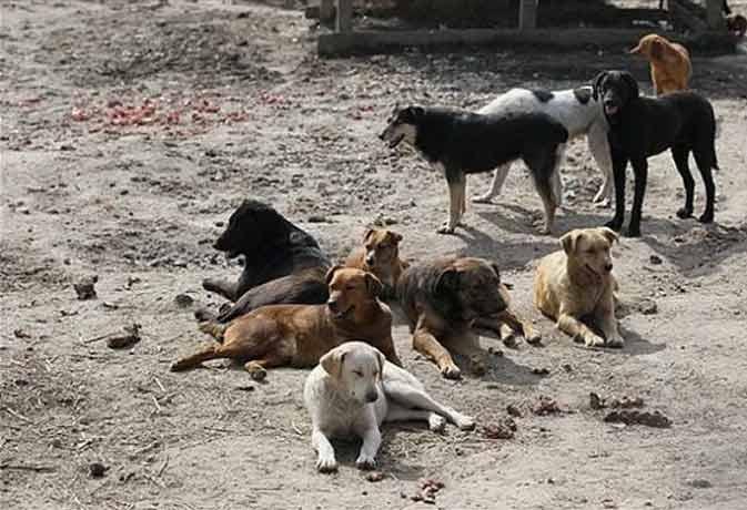 आवारा कुत्तों ने पकड़वा दिया मर्डर करने वाले को