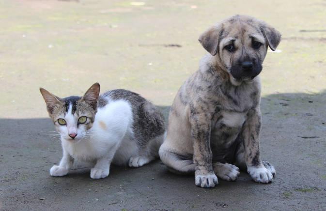 अमेरिका में अब कुत्ते और बिल्ली खाने वाले नहीं होंगे बर्दाश्त, लगेगा प्रतिबंध